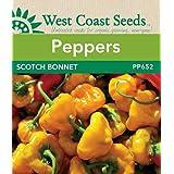 Pepper Seeds - Scotch Bonnet