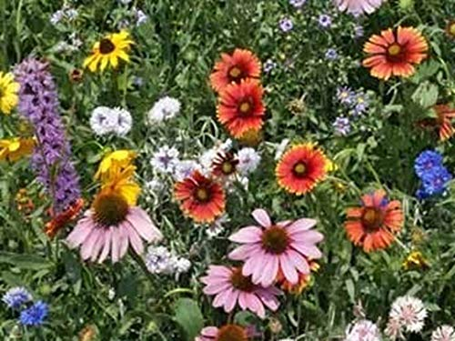Northeast Wildflower Mix Seeds Butterfly and Bee Attracting Blend ST04 (4000 Seeds)