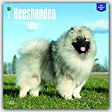 Keeshonden Keeshond - 2017 - 12 Inch x 12 Inch Hanging Square Wall Photographic Dog Breed Planner Calendar