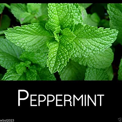 Mint- Peppermint, Mentha Piperita(300 Seeds) Grow Indoors or Outdoor-organic !