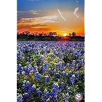 A Bluebonnet Sunset - Artisan Texas Jigsaw Puzzle