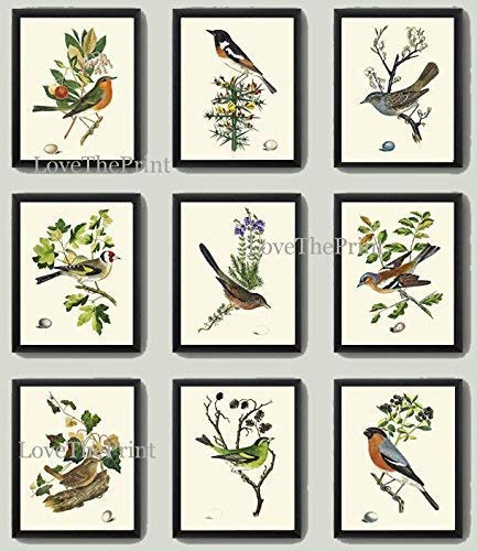 (Bird Print Art Set of 9 Prints Antique Art Beautiful Antique Colored Colorful Natural Science Summer Garden Nature Fruit Berries Tree Branch Leaf Home Room Wall Decor Unframed CJ)