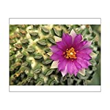 10x8 Print of Flowering hatchet cactus, with flattened spine clusters. Pelecyphora (13957251)