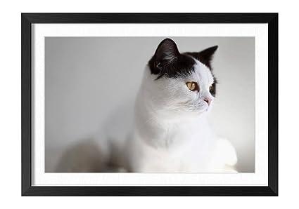 Amazon.com: FHYGJD White Cat Black Ears Yellow Eyes Black Frame Art ...