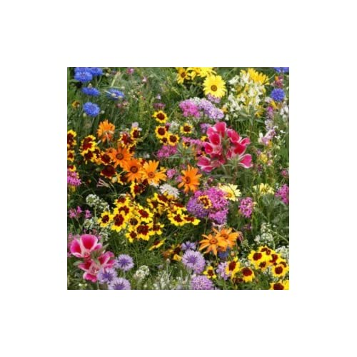 Discount Burst of Bloom Wildflower Seeds Mix (Attracts Butterfly's/Hummingbirds!) - 2500 Count - SUMMER SALE!- (Isla's Garden Seeds) - 99.38% Purity! 90% Germination! Total Quality! Burst of Bloom for cheap