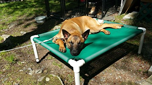 Large Green Mesh Elevated Portable Dog Bed, Cat Bed, Pet ...