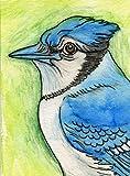 ACEO ATC Original Drawing-Blue Jay Bird-free shipping- Mixed Media Art-Carla Smale