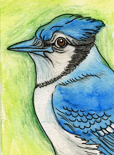 ACEO ATC Original Drawing-Blue Jay Bird-free shipping- Mixed Media Art-Carla Smale by Carlas Pet Portraits