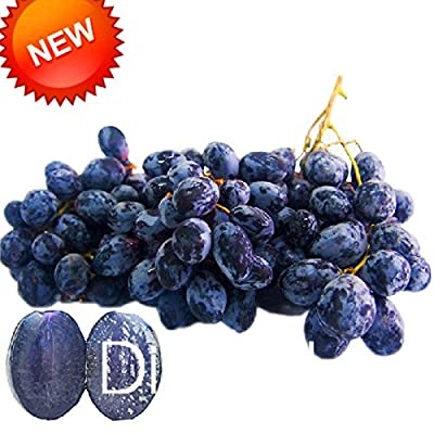 Big Promotion!100 PCS/Lot Seedless Black Grape Seeds Advanced Fruit Seed Natural Growth Kyoho Gardening Fruit Plants,#65JSGL