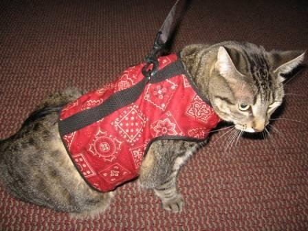 Image of Kitty Holster Cat Harness, X-Large, Red Bandana