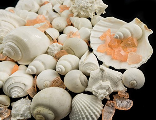 (White Decorative Sea Shells with Pearlized Peach Sea Glass Chips |1 Pound for Decoration | Shells for Craft | Plus Free Nautical Ebook by Joseph Rains)