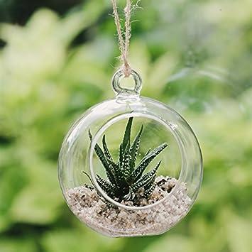 Plantpak Glass Globe Terrarium Amazon Co Uk Garden Outdoors