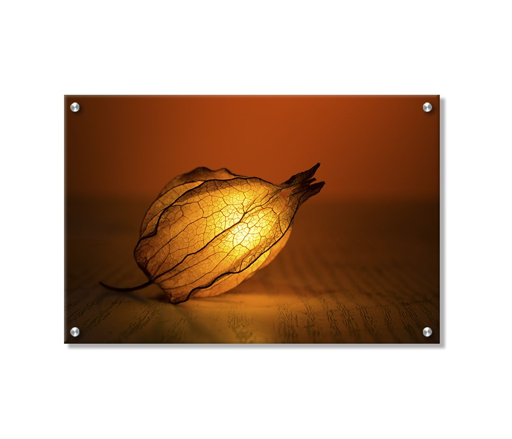 Peruvian Ground Cherry Wall Art Decor Printed on Brushed Aluminum by Buttered Kat (Small , 22 x 14.5 Inches)
