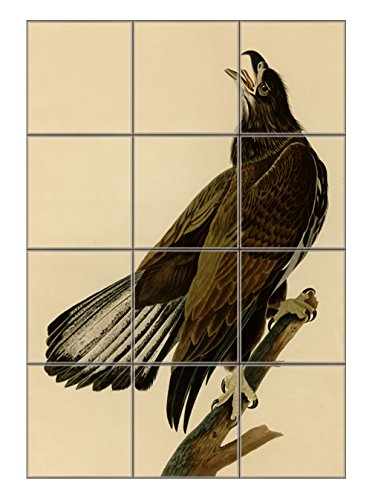 White Headed Eagle #2 (Audubon) Vertical Tile Mural Satin Finish 16