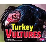 Turkey Vultures (Birds of Prey)