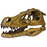 Velociraptor Dinosaur Skull (Recreation)