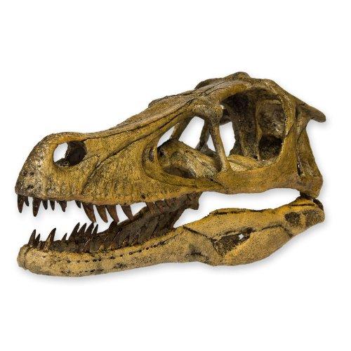 (Velociraptor Dinosaur Skull (Recreation))