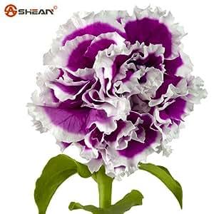 Mezcla de semillas de color de flores de clavel hermoso de semillas flores preciosas para jardín de 200 partículas / lot