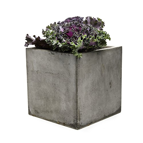 Repose PT10434903 Cubo Succulent Planter, (Large Patio Planters)