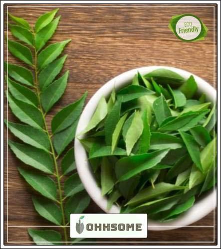 Seedsown Planta para jardín de Cocina Gandhabevu - Semillas Curry ...