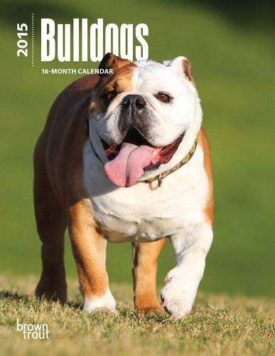 english bulldog 2015 calendar - 9