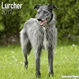 Lurcher Calendar 2017 - Dog Breed Calendars - 2016 - 2017 wall calendars - 16 Month by Avonside
