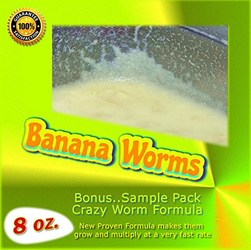 Insectsales.com Banana Worms (Large Producing Cultures) 8 oz.