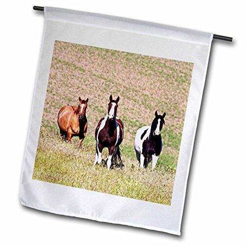 Danita Delimont - Animal - Horses on the hill side - 18 x 27 inch Garden Flag (fl_231836_2)