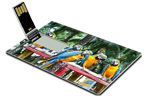 Luxlady 32GB USB Flash Drive 2.0 Memory Stick Credit Card Size Macaw parrot eating Nong Nooch Tropical Garden Pattaya Thailand IMAGE 21987353