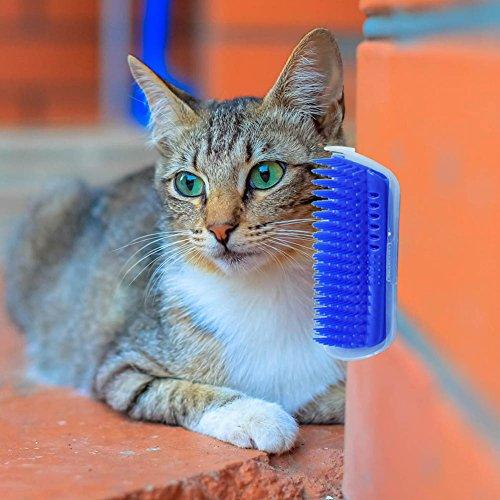 Amazon.com : ASOSMOS Cat Massage Brush Comb Wall Corner Self Groomer Grooming Kitten Supplies Durable Toy (gray) : Pet Supplies