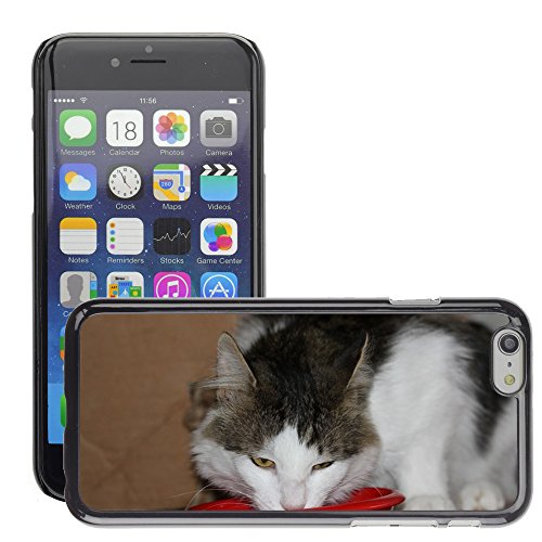 Just Phone Cases Hard plastica indietro Case Custodie Cover pelle protettiva Per // M00129172 Cat Hangover European Shorthair Cat // Apple iPhone 6 PLUS 5.5""