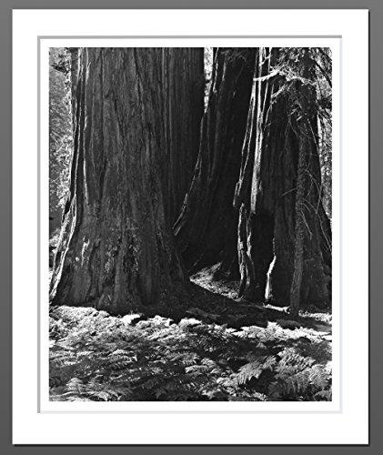Morning Light, Alta Trail, Giant Forest (#3)