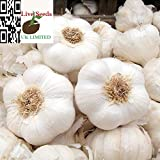 Live Seeds-Garlic 'Provence Wight' Hardy Bulb (PLANTING NOW) 3 Bulbs or 30 cloves