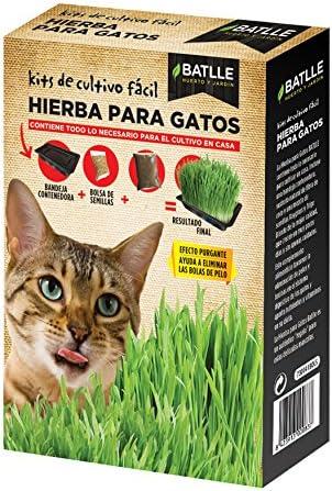 Semillas Amomáticas - Hierba para Gatos - Batlle: Amazon.es: Jardín