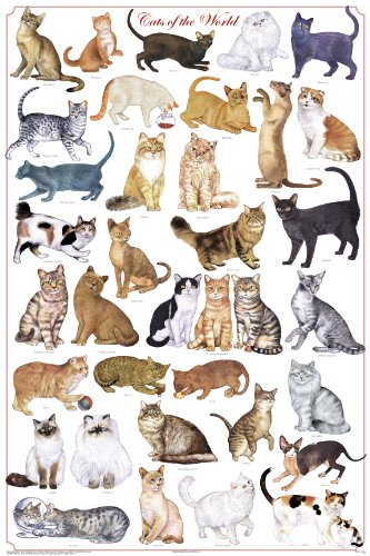 Cats of the World Poster by Feenixx (Cat Breed Chart)