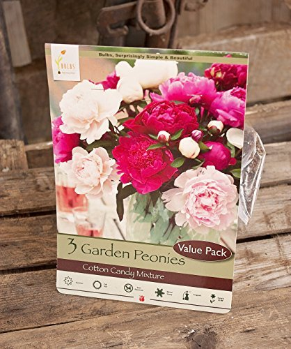 Candy Daylily (Cotton Candy Mixture Garden Peony: Paeonia lactiflora - 3 Bulbs)