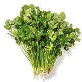 Coriander Cilantro 400 Seeds for Planting NON-GMO Vegetable