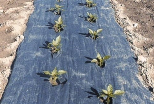 4-ft-x-200-ft-black-biodegradable-planters-paper-mulch-by-growers-solution