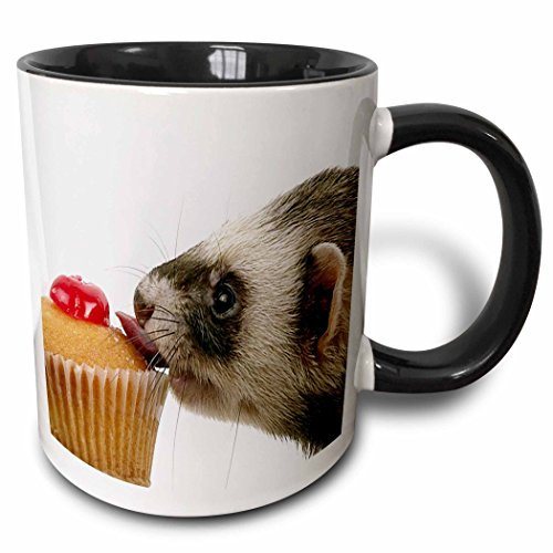 (3dRose 17288_4 Ferret Eating Cupcake-Two Tone Black Mug, 11 oz,)