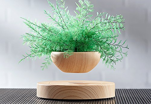 Levitating Fern by Levitation Arts, Inc.