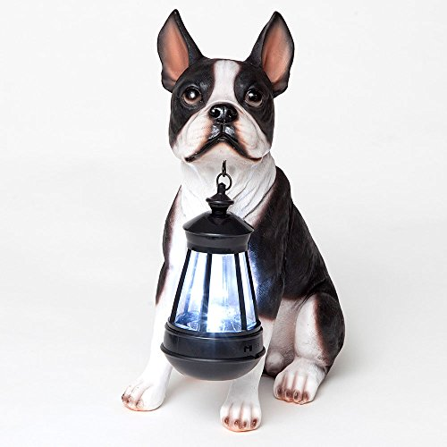 Bits and Pieces - Boston Terrier Solar Lantern - Solar Powered Garden Lantern - Resin Dog Sculpture with LED Light - Outdoor Lighting and Décor