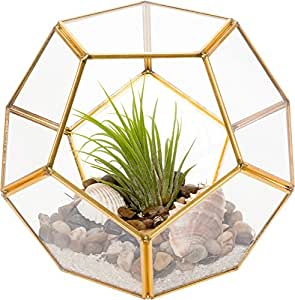 Glass Terrarium - Geometric Dodecahedron Desktop Garden Planter by Mindful Design (Gold)