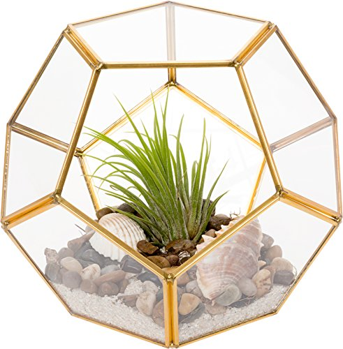 Mindful Design Glass Terrarium - Geometric Dodecahedron Desktop Garden Planter (Gold)]()
