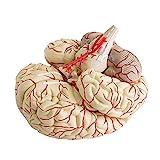 Finlon Medical Anatomical Brain Model, Life Size