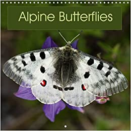 8686eccc99bab Alpine Butterflies 2016: A calendar featuring stunning photos of some of the  beautiful butterflies that can be found in the Alps (Calvendo Nature): Ray  ...
