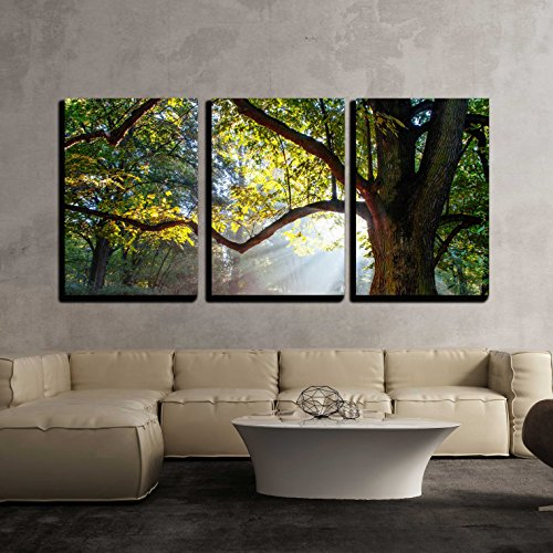 wall26 - 3 Piece Canvas Wall Art - Mighty Oak Tree - Modern Home Decor Stretched and Framed Ready to Hang - 24