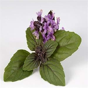 promoción grande de semillas de albahaca dulce embalaje original semillas de Ocimum basilicum vegetales aromáticas semillas de albahaca, semillas de flor - 100 pcs