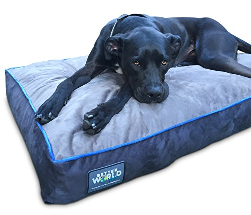 First Quality 6 Quot Thick Orthopedic Dog Bed Pure Premium