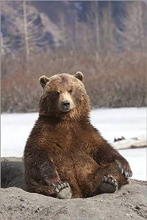 Poster 40 x 60 cm: Sitting Brown Bear di Doug Lindstrand/Design Pics - Stampa Artistica Professionale, Nuovo Poster Artistico