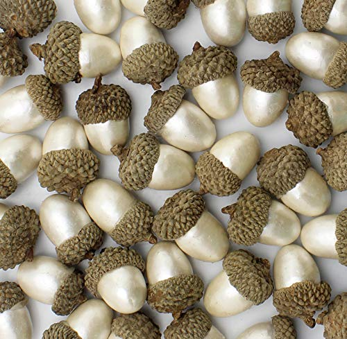 AuldHome Pearl White Acorns (60-Pack),Decorative Artificial Acorns Crafts, Christmas & Seasonal Decor